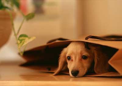 养狗的七种好处你都知道吗